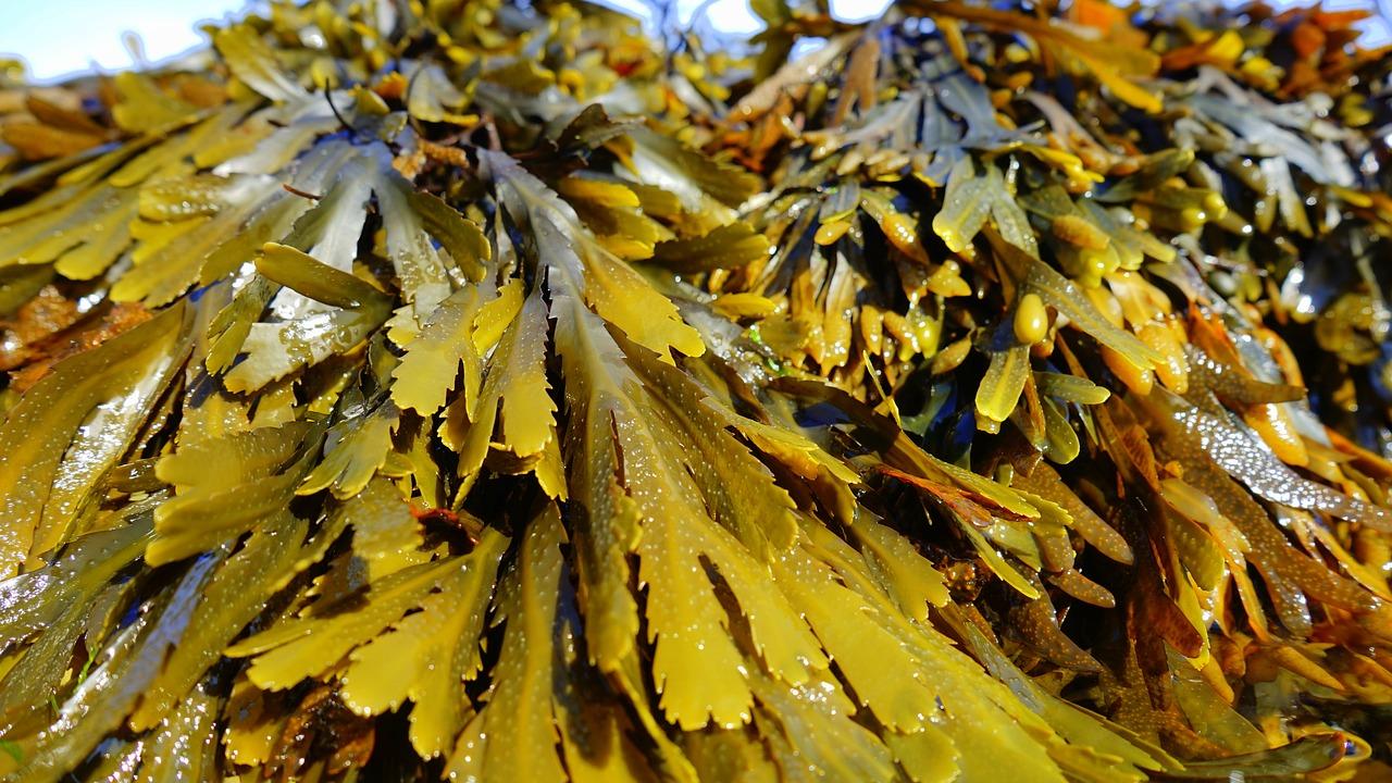 山盛りの海藻